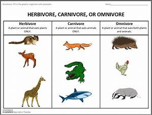 List Of Omnivorous Animals | www.pixshark.com - Images ...