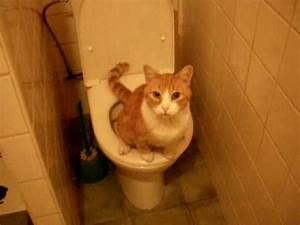 mon chat tom39pisse dans les wc youtube With pisse de chat sur parquet