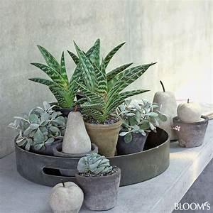 Pflanzen Für Drinnen : wohndeko grau gr ne zimmerpflanzen beleben interieur ensemble auf tablett pflanzen ~ Frokenaadalensverden.com Haus und Dekorationen