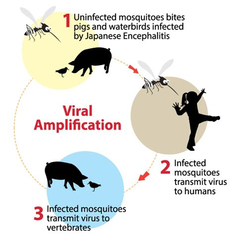 how is what is japanese encephalitis positive parenting