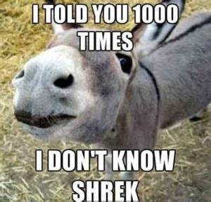 Donkey Meme, Awesome Collections of Funny Donkey Pics