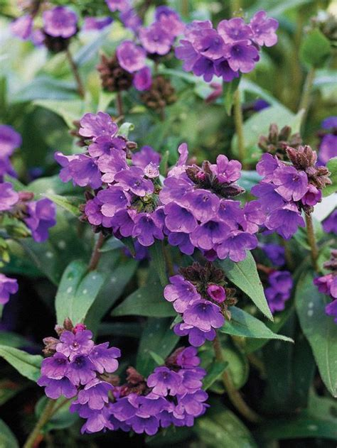 best shade perennials zone 5 the best perennials for shade