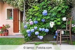 Hortensien Wann Pflanzen : anleitung hortensien schneiden fr hjahr oder herbst ~ Lizthompson.info Haus und Dekorationen