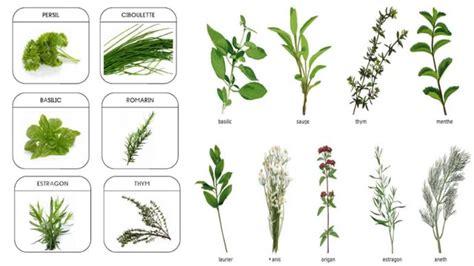 herbes aromatiques cuisine des plantes aromatiques dans ma cuisine