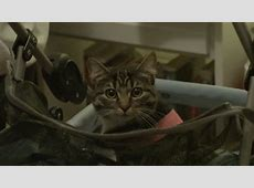 Cinema Cats From Feline Film Stars to Kitty Cameos Page 5