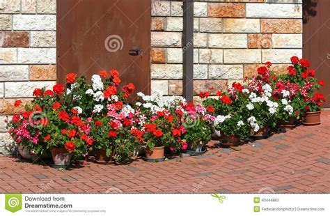 terrazzo fiorito bello terrazzo fiorito con i vasi dei gerani 6 di