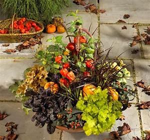 Welche Pflanzen Kann Man Im Herbst Pflanzen : r lcker gr n erleben bl tter und bl ten f r den herbstbalkon ~ Articles-book.com Haus und Dekorationen