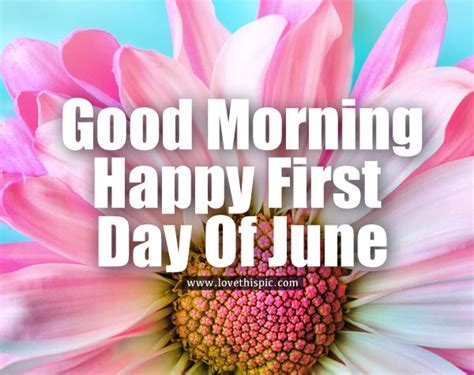 Light Pink Good Morning Happy First Day Of June Flora ...