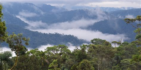 conserving amazonian tropical ecosystems smithsonians