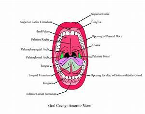 Anteriororalcavitycomplete