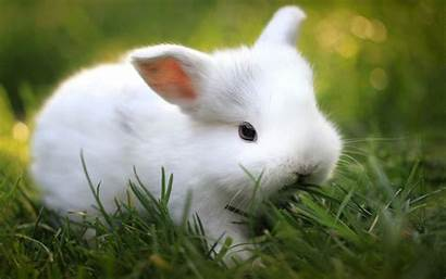 Bunny Wallpapers Bunnies Telusers Animals Wallpaperplay Walls