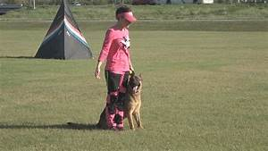 south texas dog trainer nationally recognized kiiitvcom With local dog training