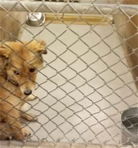 The Amazing Impact of Massage at Animal Shelters | Animal ...