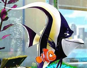 62 best Surf & Turf images on Pinterest | Cartoon, Disney ...