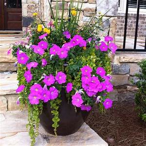 Beautiful DIY potted plant for front porch! Wave petunias ...