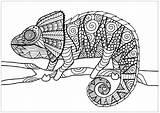 Chameleon Coloring Chameleons Adults Branch Adult Justcolor Lizards Source Visit sketch template