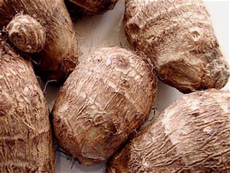 recette de cuisine camerounaise gratuit taro fiche taro et recettes de taro sur supertoinette