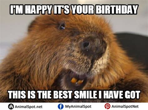 Beaver Meme - beaver memes