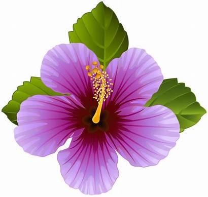 Purple Transparent Flower Clip Flowers Clipart Hibiscus