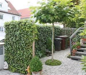 Efeu Hecke Co Sichtschutz Im Garten by Hecke Am Laufenden Meter 174 Efeu 100 Cm Dehner Garten