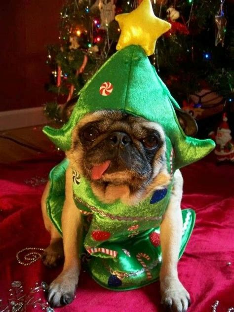 pug christmas tree 432 best pugs in costume images on doggies dogs and puppies
