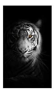 Download Portrait, minimal, white tiger, dark wallpaper ...