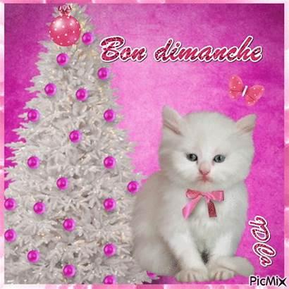 Dimanche Bon Picmix