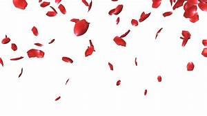Flower Petals Falling Png | Flower Inspiration