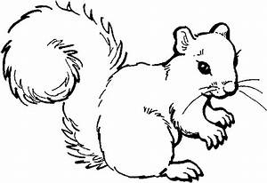 Woodland Animal Coloring Pages Rainforest Animals Coloring ...