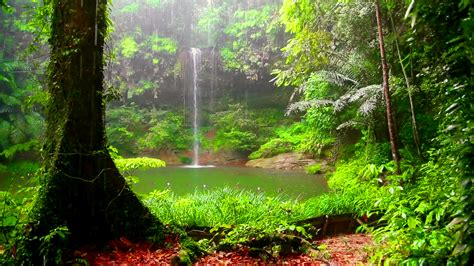 Green Forest Image by 30 Green Forest Wallpaper Pictures