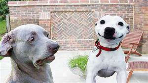 Dogs Making Funny Faces - Funny And Cute Dog Compilation ...