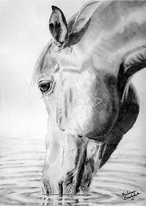 17+ best ideas about Animal Drawings on Pinterest | Pencil ...