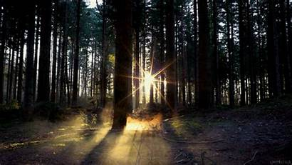 Nature Gifs Dawn Summer Night Forest Animated