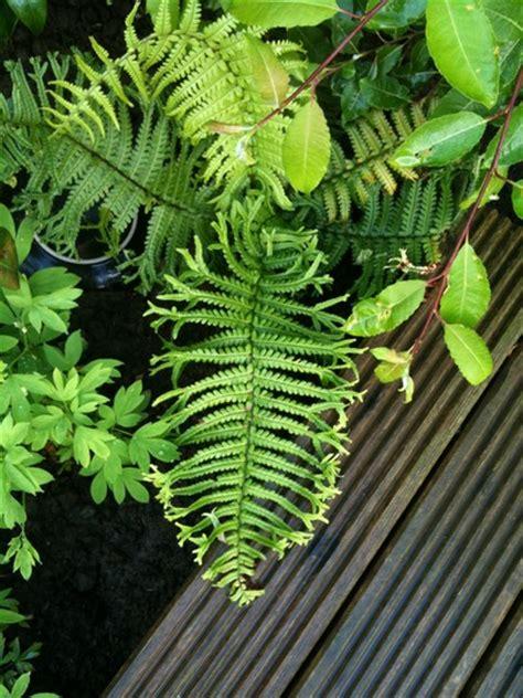 fern identification      put