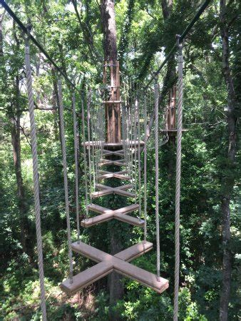 ape treetop adventure  plano tx award winning top tips