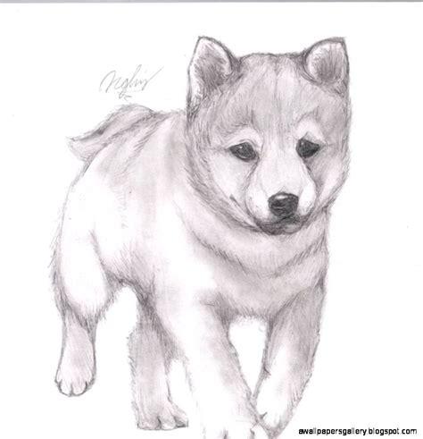 easy cute animal drawings  pencil wallpapers gallery