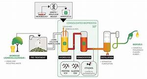 Consolidated Bioprocessing  U2013 The Future Of Second Generation Bioethanol Production