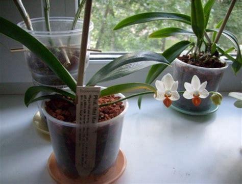 menanam anggrek hidroponik mudah flora fauna