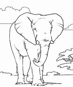 1000 Images About Elephant Coloring Pages On Pinterest