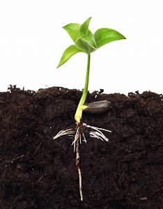Aprikosenbaum Selber Ziehen : apfel aus kern ziehen so wird ein baum daraus ~ A.2002-acura-tl-radio.info Haus und Dekorationen