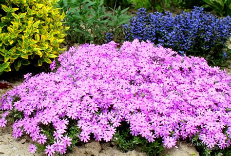 shaded flower 15 colorful perennials for shade northern nester