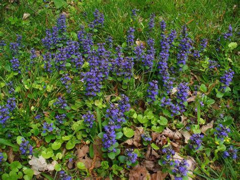 Bodendecker Für Lehmboden by Bl 252 Hende Bodendecker Im Schatten 10 Pflegeleichte Arten
