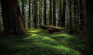 Roseburg Forest sells 170,000 acres to timber investors ...