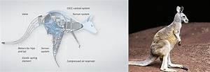 Bionic Kangaroo Controlled By Gestures  U00ab Inhabitat  U2013 Green