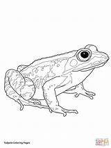 Coloring Tadpole Frogs Woodfrog Frog Printable Supercoloring Drawing Preschool Tree Getdrawings Animals Giving Categories sketch template