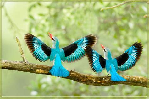 beautiful birds wallpapers birds pictures cute birds