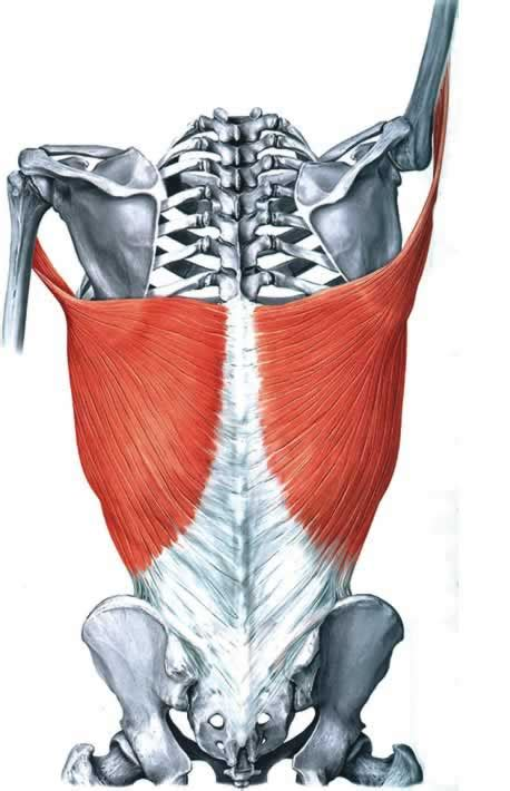 How To Feel Your Lats When You Paddle | Pacific Paddler ...
