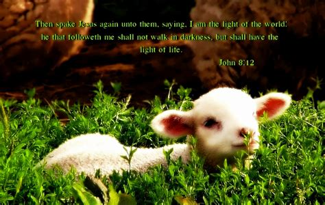 bible quotes animal rights quotesgram