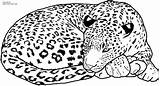 Leopard Coloring Pages Printable Getcoloringpages sketch template