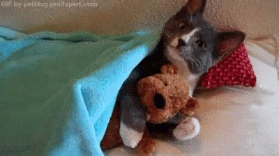 All Tucked In Gif  Cute Cat Love  Discover & Share Gifs